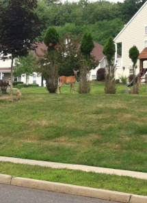 There was another deer, but she bolted across the road between runners.